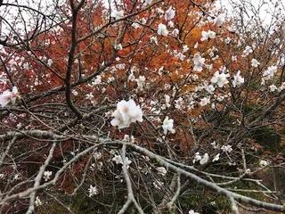 冬桜.jpeg